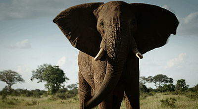 Movie still, elephant