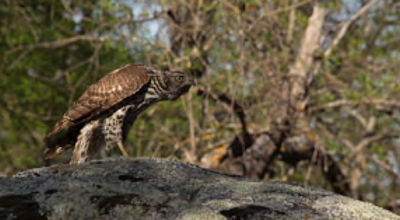 Movie still, goshawk
