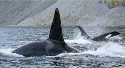Movie still, killer whales