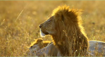 Movie still, lion